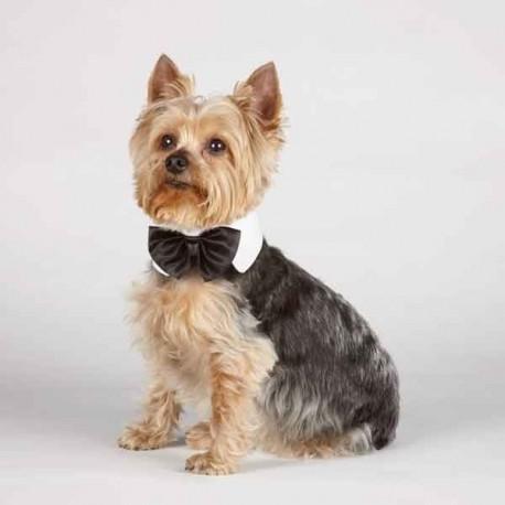 Aria™ Canine Royale Dog Bowtie